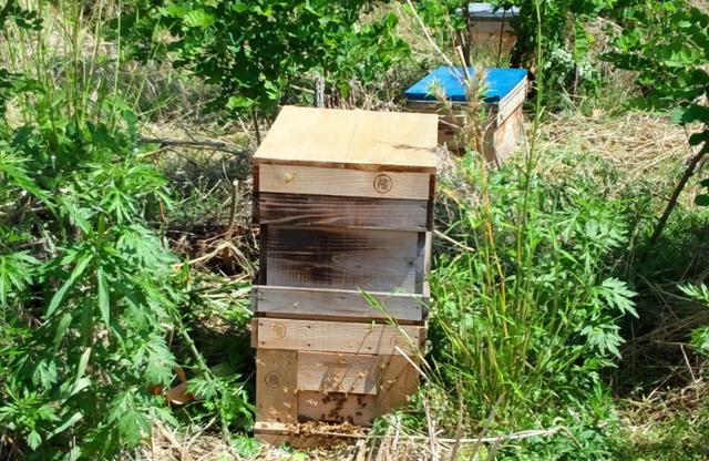 ミツバチ巣箱.png